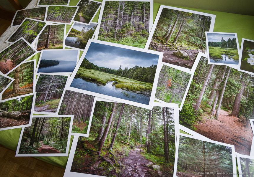 forrest_prints