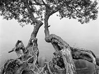 lakeside_tree