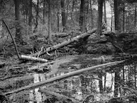 rockwood_swamp
